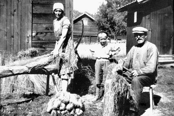 Linberedning Tibble omkr 1930. Linberedning hos Nyströms (idag Bäckström). Elin Nyström o t h svärfar Nygårds Per Nyström.