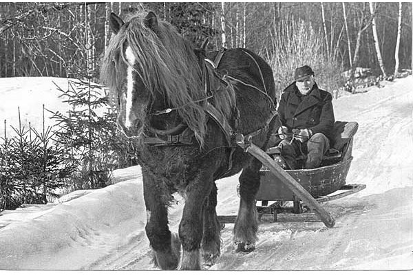 Slädtur Axel Tolförs på slädtur omkr 1980.