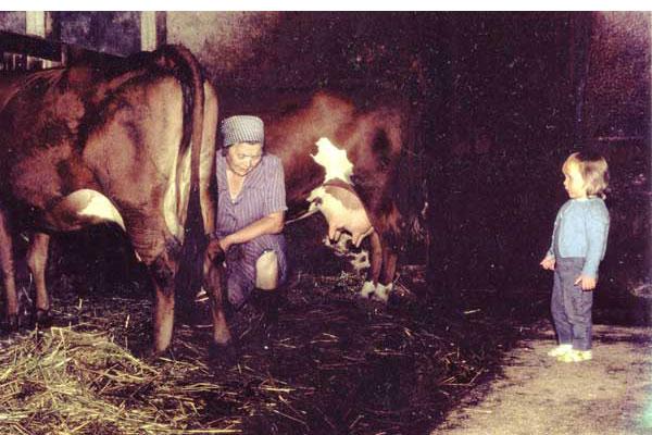Mjölkning Sunds Greta mjölkar 1969. Maria Storén 2 år. Sista korna i centrala byn och sista året med djuren.