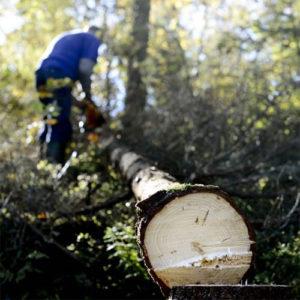 Skogsavverkn